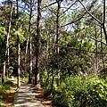 2013-11-09忠義山親山步道071.jpg