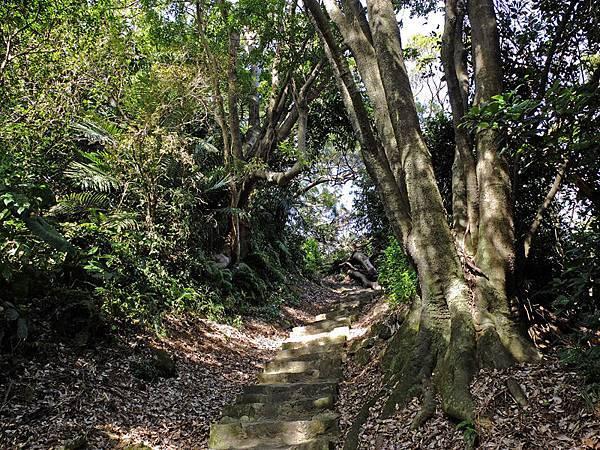 2013-11-09忠義山親山步道084.jpg