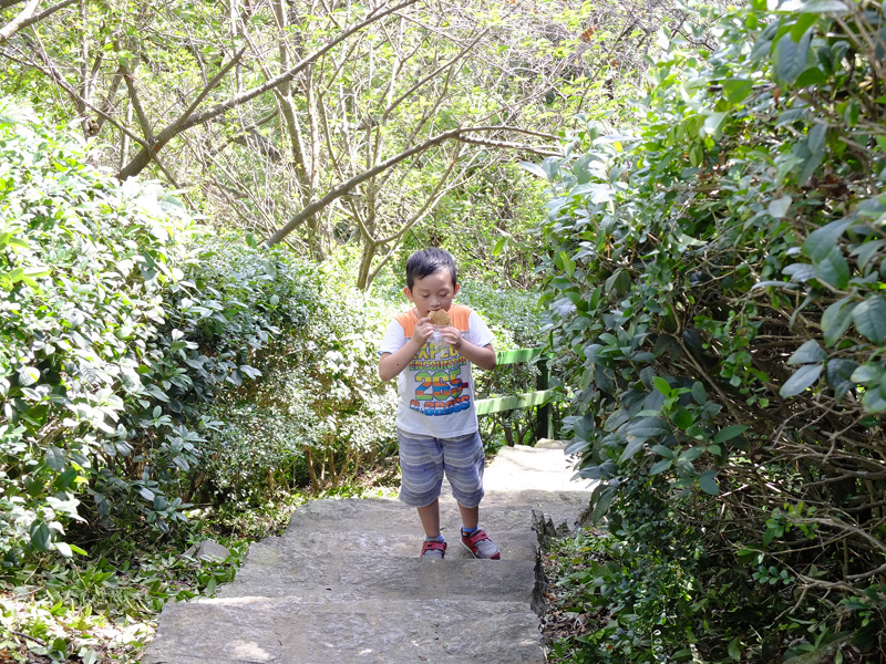 2013-11-09忠義山親山步道097.jpg