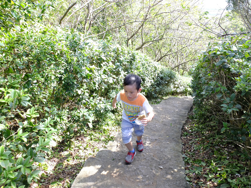 2013-11-09忠義山親山步道098.jpg