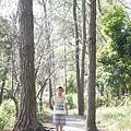 2013-11-09忠義山親山步道112.jpg
