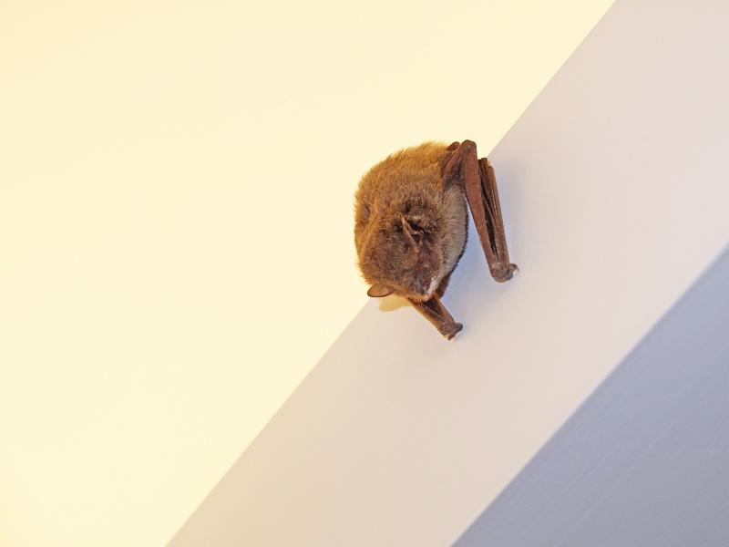 2014-01-07蝙蝠002.jpg
