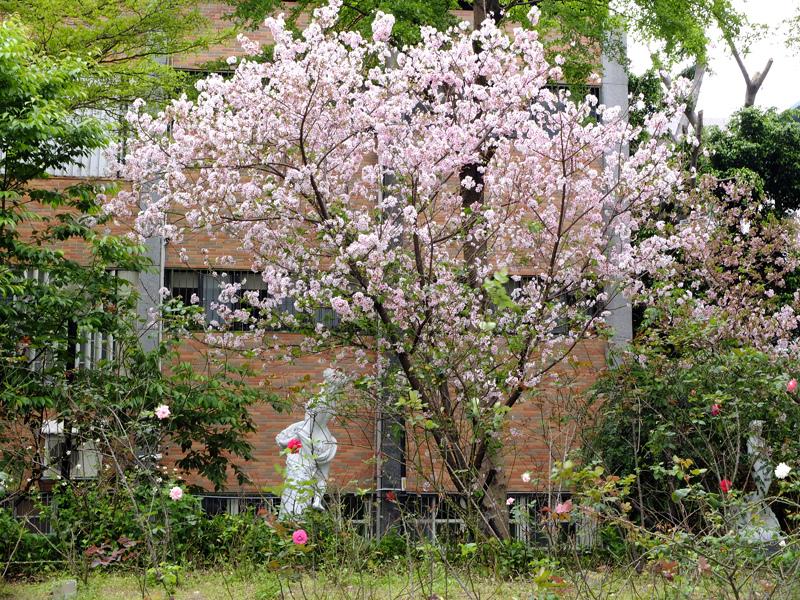 2014-04-06阿巴的私房菜013.jpg