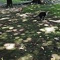 2014-06-12GR二二八公園019.jpg