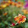 2014-06-15台北花卉村040.jpg