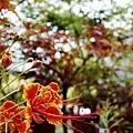 2014-06-15台北花卉村047.jpg