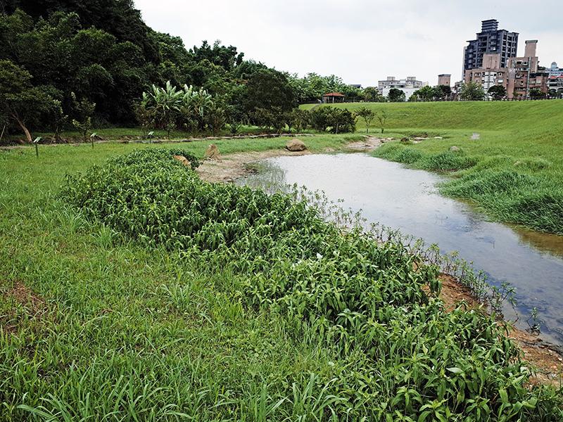 2014-07-13大溝溪親水步道057.jpg