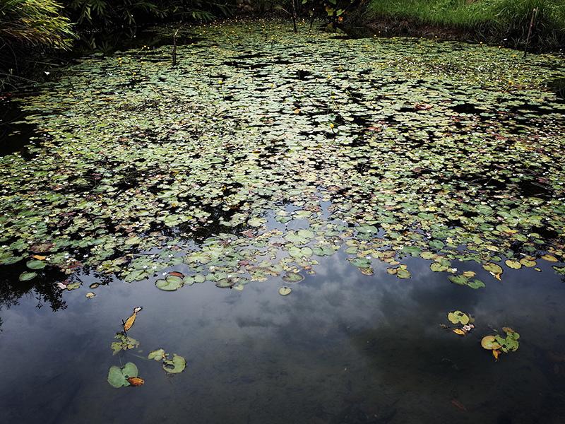 2014-08-10關渡自然公園017.jpg