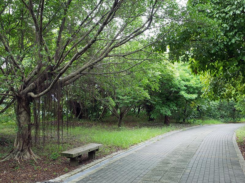 2014-08-10關渡自然公園026.jpg