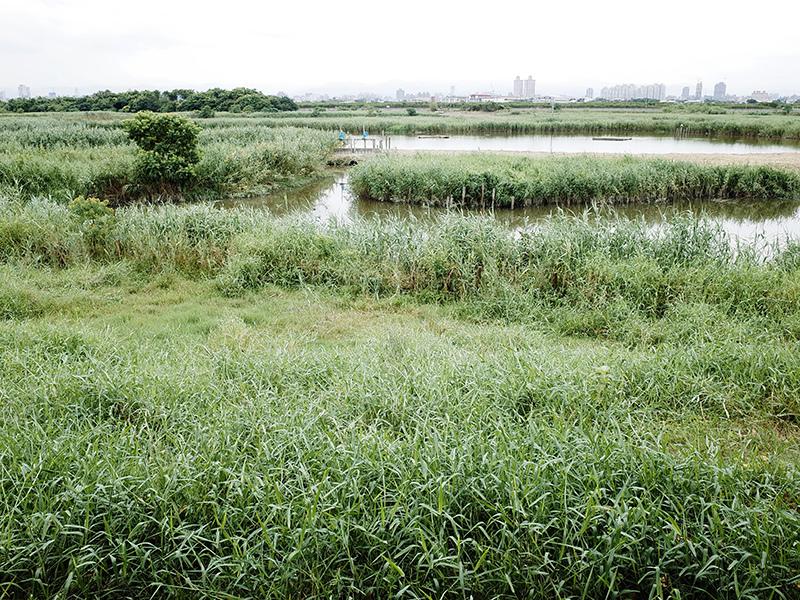 2014-08-10關渡自然公園040.jpg