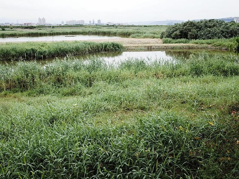 2014-08-10關渡自然公園042.jpg