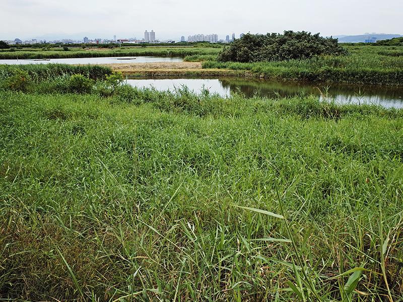 2014-08-10關渡自然公園047.jpg