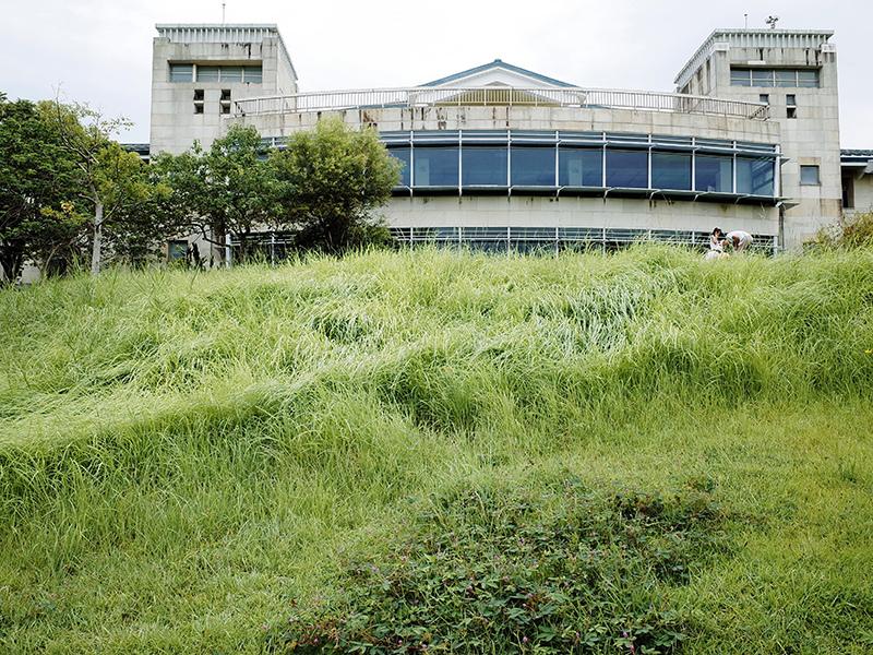 2014-08-10關渡自然公園048.jpg