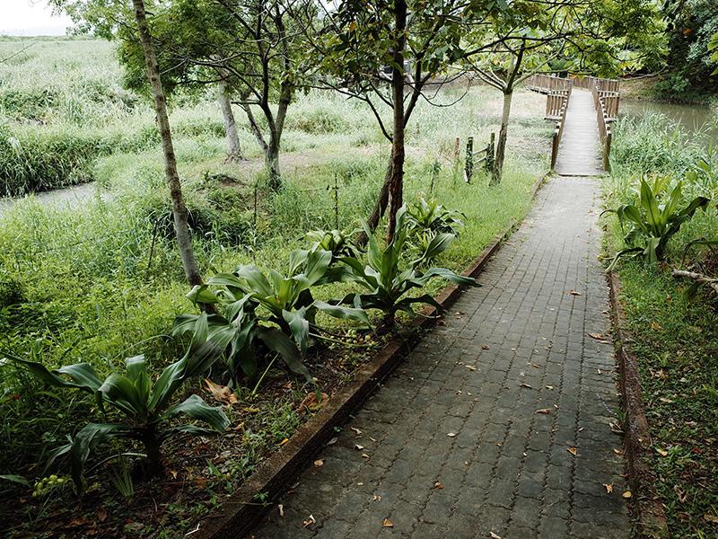 2014-08-10關渡自然公園049.jpg
