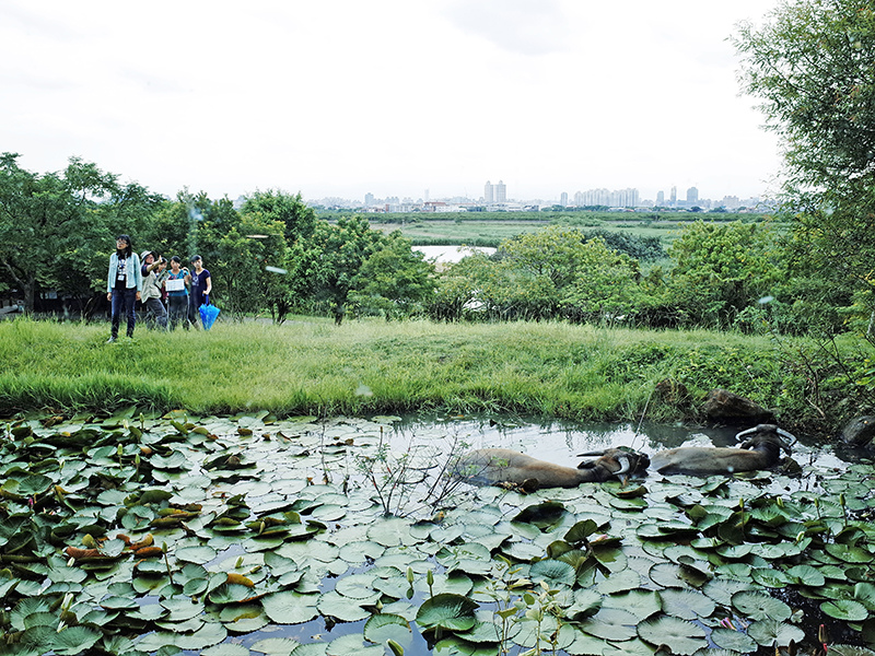 2014-08-10關渡自然公園071.jpg