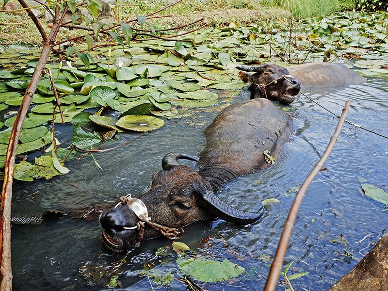 2014-08-10關渡自然公園077.jpg