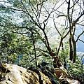 2014-11-22五寮尖010.jpg