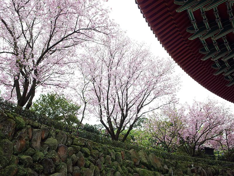 2015-03-21無極天元宮039.jpg