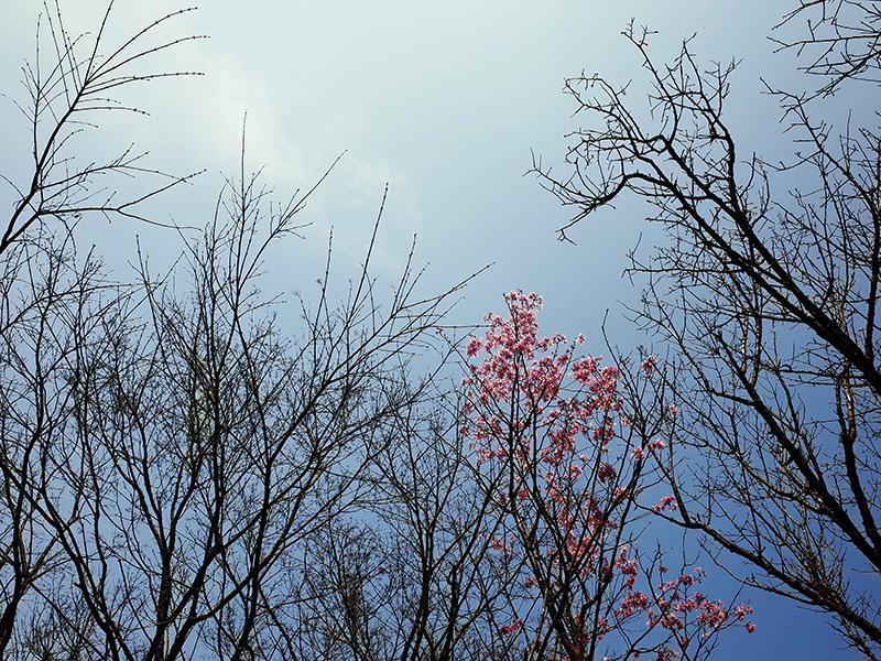 2016-03-06陽明山011.jpg