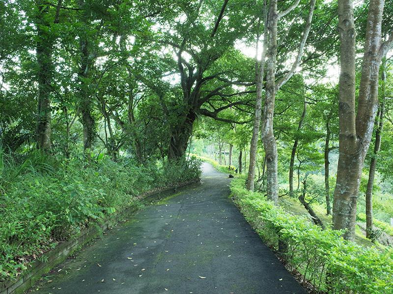 2016-07-11東勢林場026.jpg