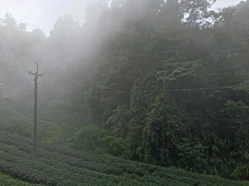 2016-08-27忘憂森林6S008.jpg