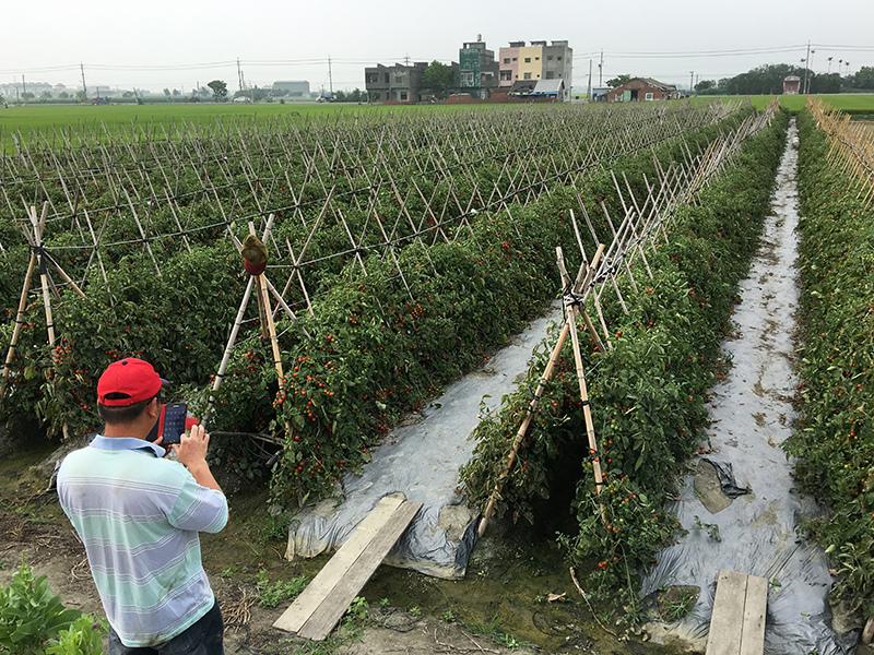 2017-05-06採番茄004.jpg