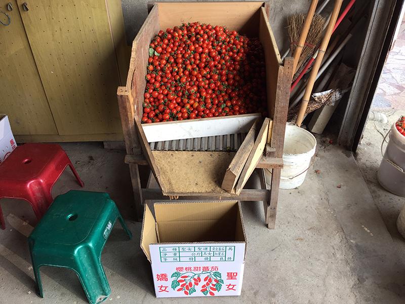 2017-05-07採番茄008.jpg
