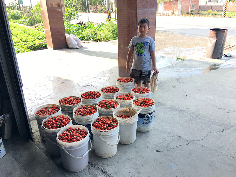 2017-05-07採番茄031.jpg
