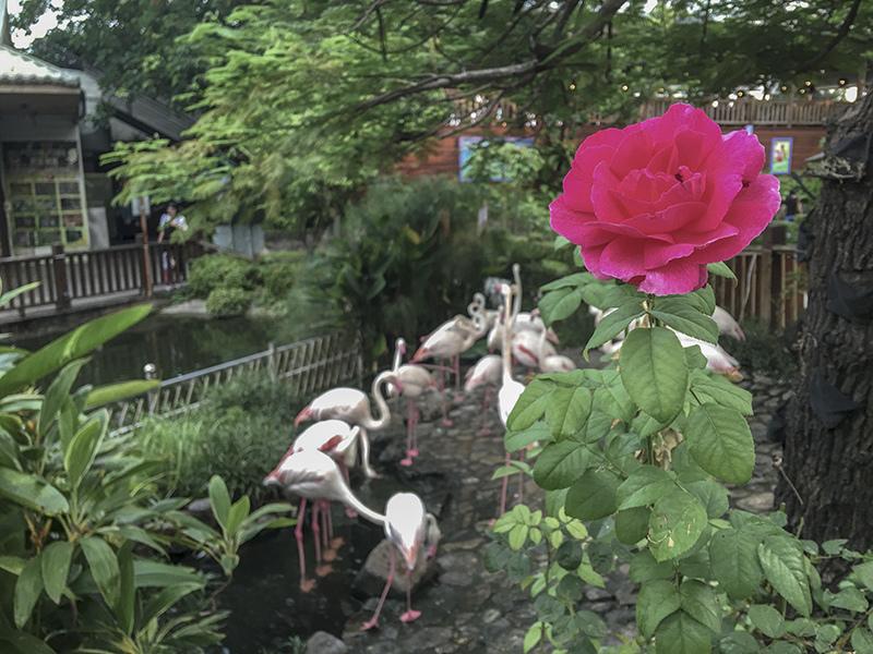 2018-07-21淨園休閒農場055.jpg