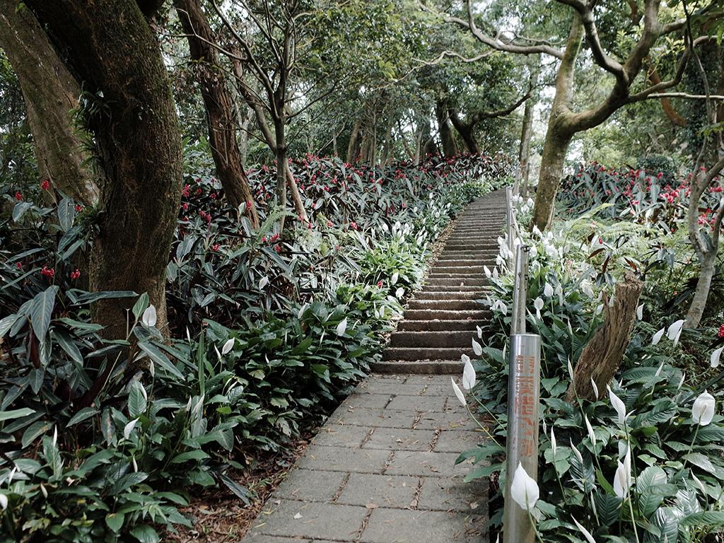 2019-05-05桐花公園-火焰山026.jpg