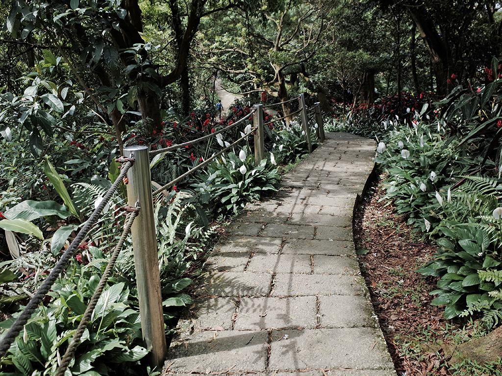 2019-05-05桐花公園-火焰山030.jpg