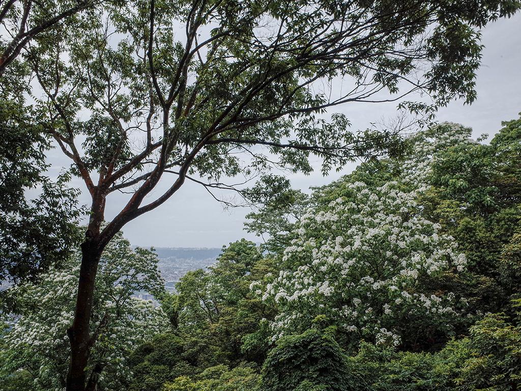 2019-05-05桐花公園-火焰山056.jpg