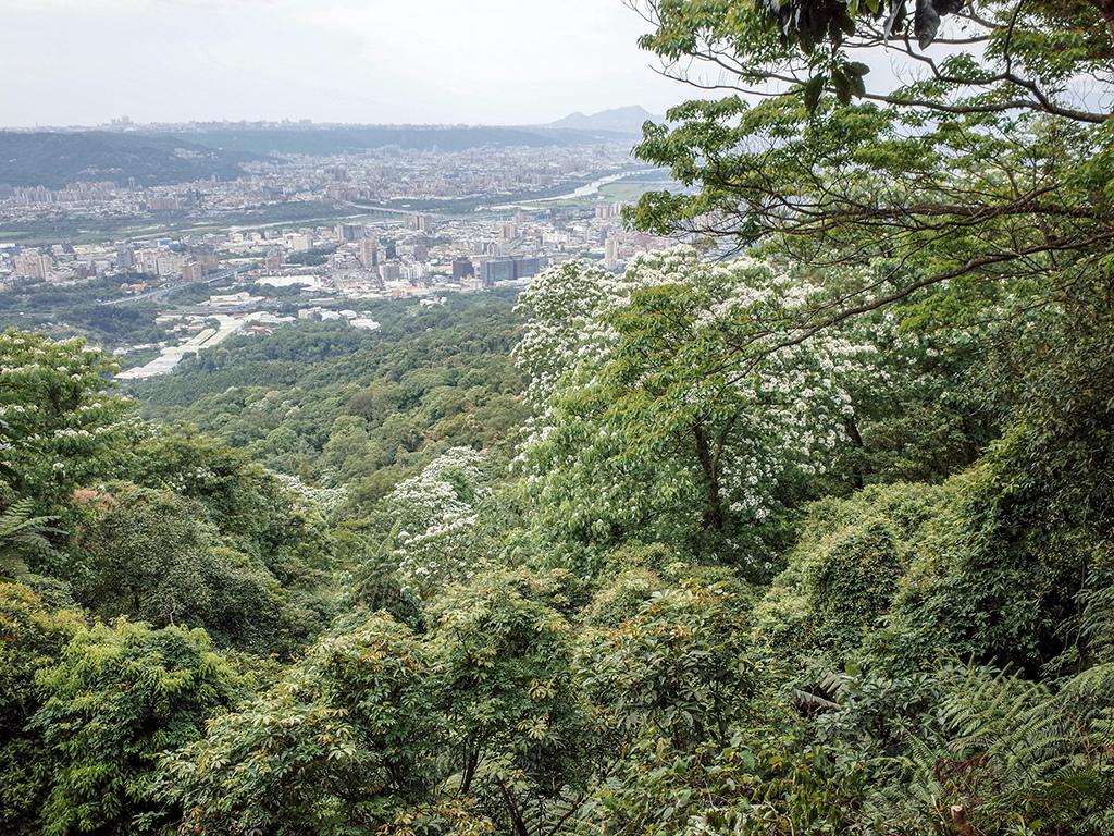 2019-05-05桐花公園-火焰山076.jpg