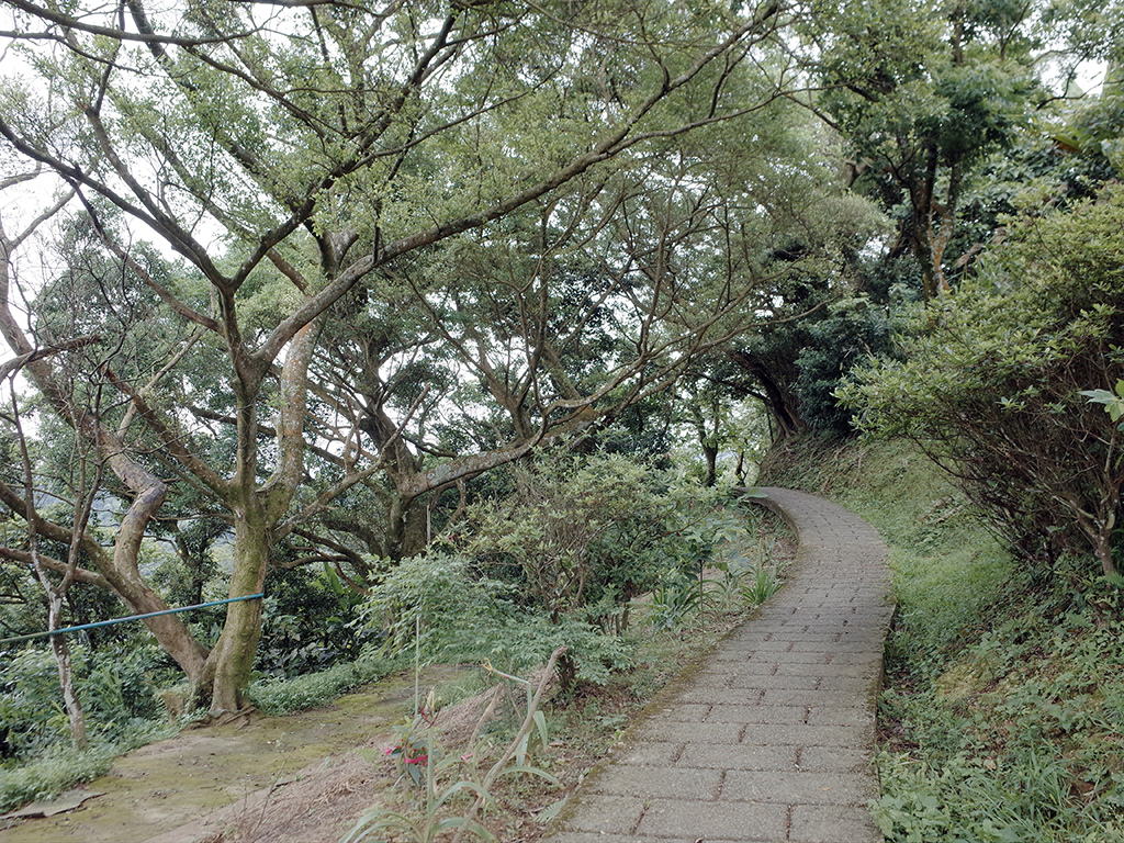 2019-05-05桐花公園-火焰山087.jpg
