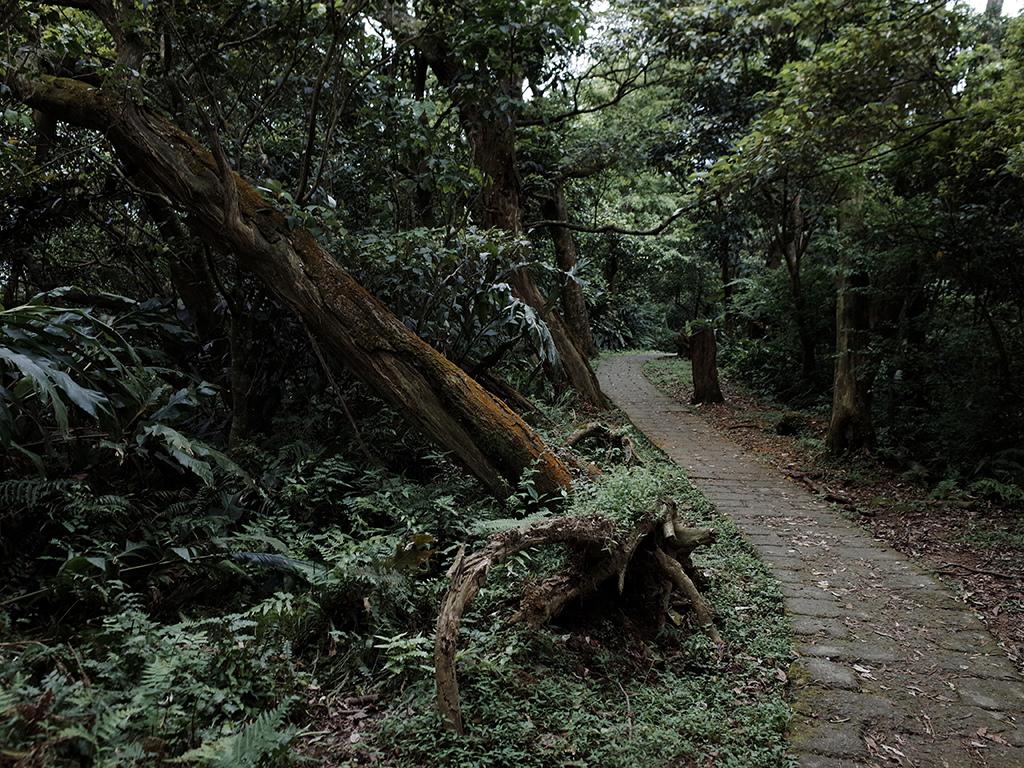 2019-05-05桐花公園-火焰山092.jpg