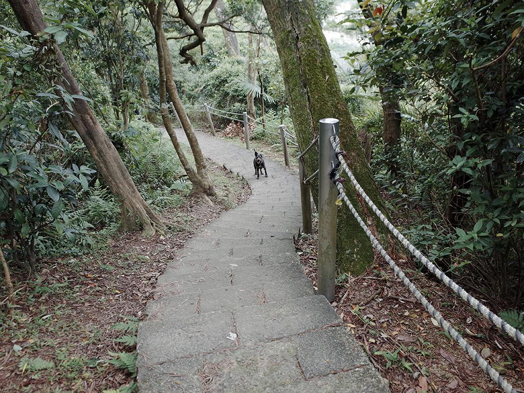 2019-05-05桐花公園-火焰山107.jpg