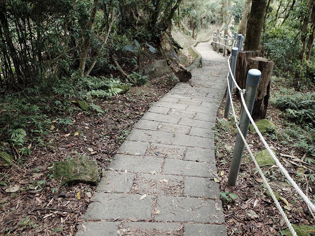 2019-05-05桐花公園-火焰山108.jpg
