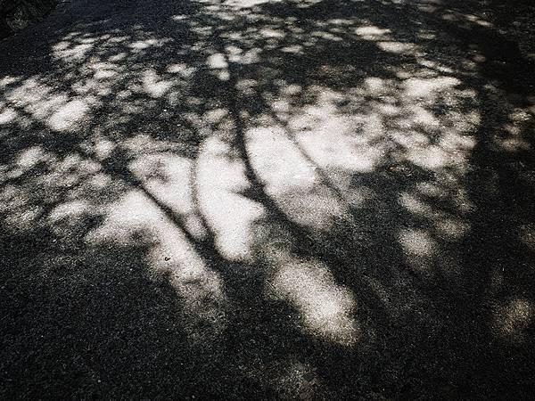 2019-08-16觀音山097.jpg