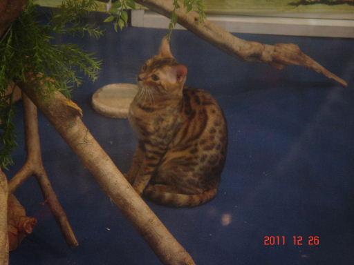 豹貓1.jpg