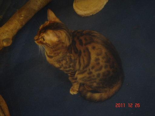 豹貓2.jpg