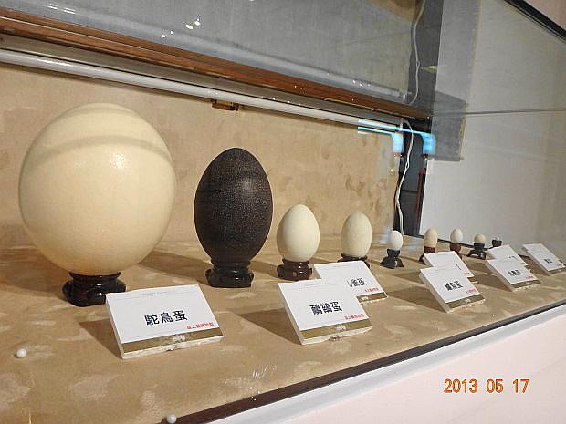 各式各樣的蛋1.JPG