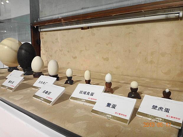 各式各樣的蛋2.JPG