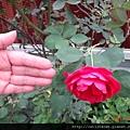 蘿莎玫瑰山莊4.JPG