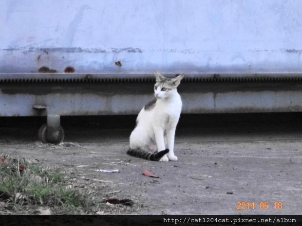 鳳山熱帶園藝-貓1.JPG