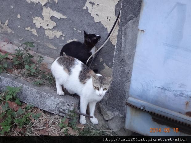 鳳山熱帶園藝-貓5.JPG