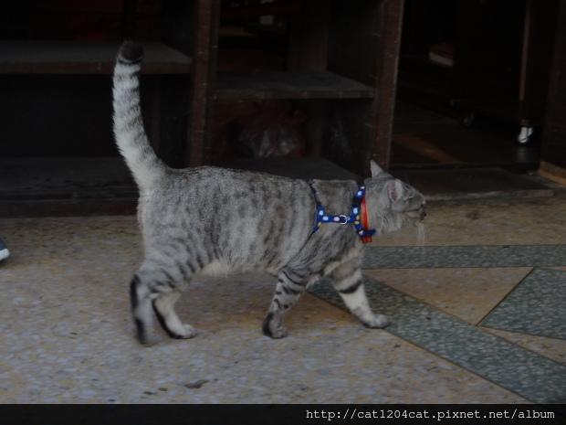 迪化街貓咪1.JPG