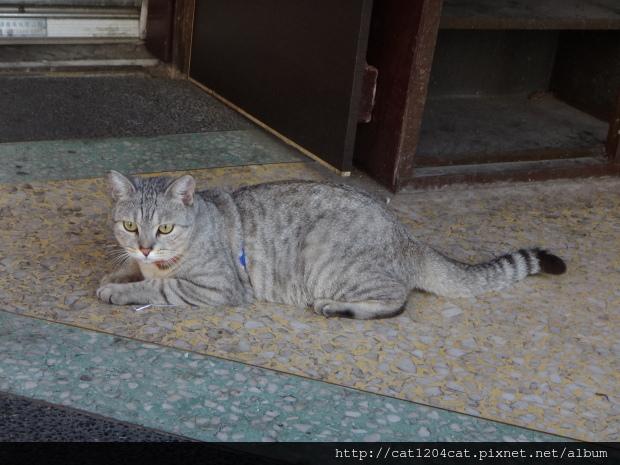迪化街貓咪2.JPG