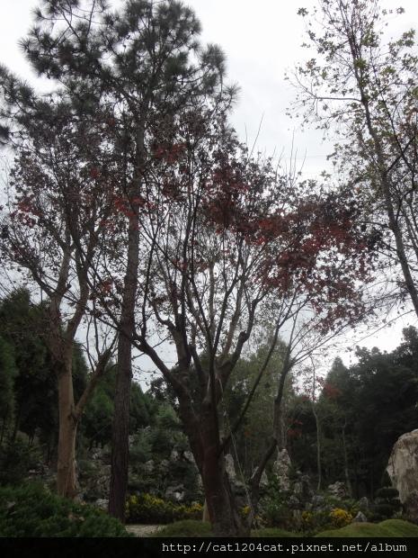 新社莊園16.JPG