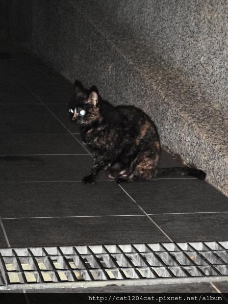 日光溫泉-貓咪.JPG