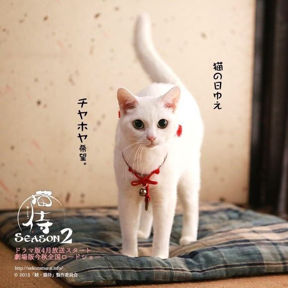 貓侍2-5.jpg